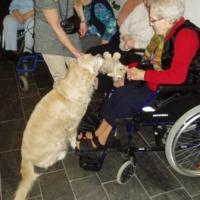 Hundetherapie (2)
